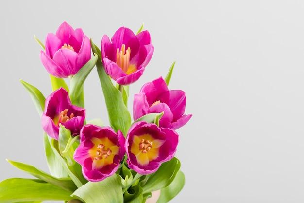 Tulpen strauß Kostenlose Fotos