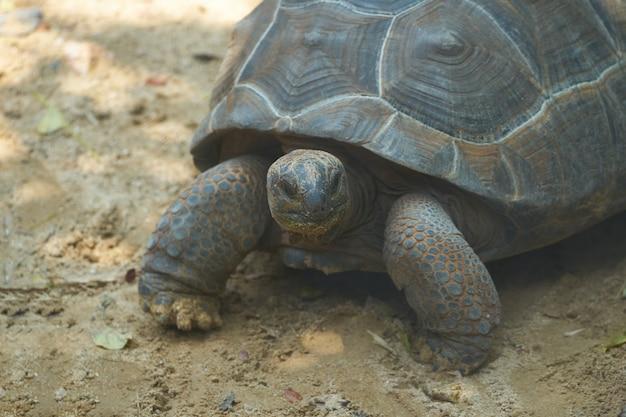 Turtoise stehen auf sandboden in schattigem Premium Fotos
