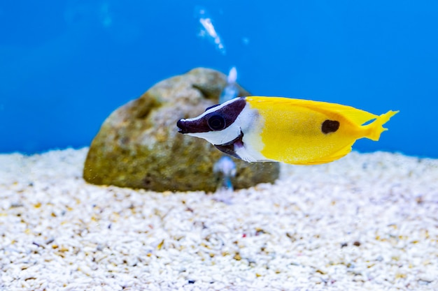 Über seefische und süßwasserfische im aquarium Premium Fotos