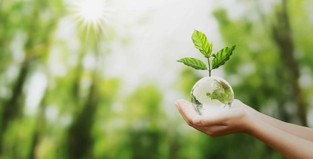 Übergeben sie das halten der glaskugelkugel mit wachsendem und grünem naturunschärfehintergrund des baums Premium Fotos
