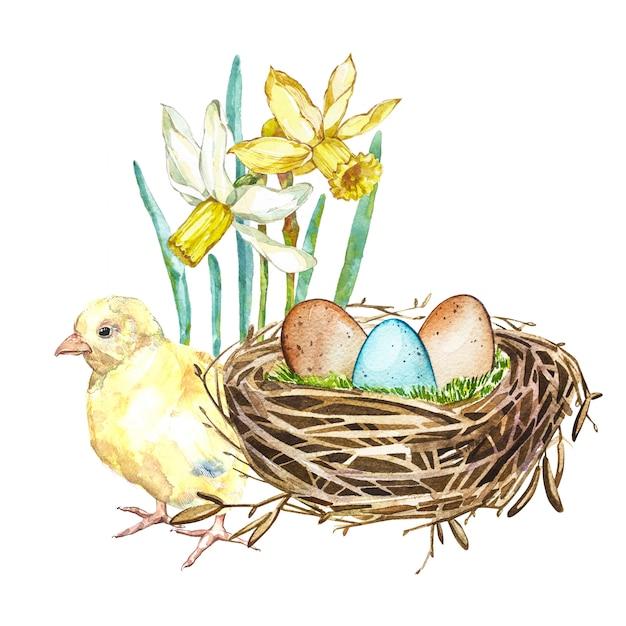 Übergeben sie gezogenes aquarellkunst-vogelnest mit eiern und frühlingsblumen, hahn, ostern-design Premium Fotos