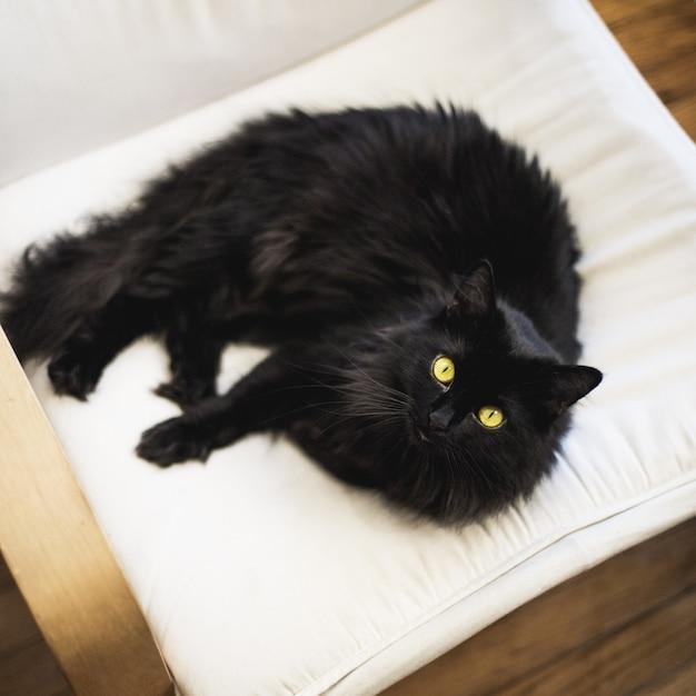 Überkopf-nahaufnahmeschuss einer schwarzen pelzigen hauskatze auf einem kissen Kostenlose Fotos