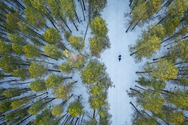 Überkopfaufnahme eines waldes mit hohen grünen bäumen während des winters Kostenlose Fotos