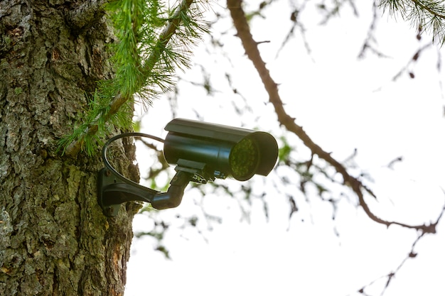Überwachungskamera auf dem baum Premium Fotos