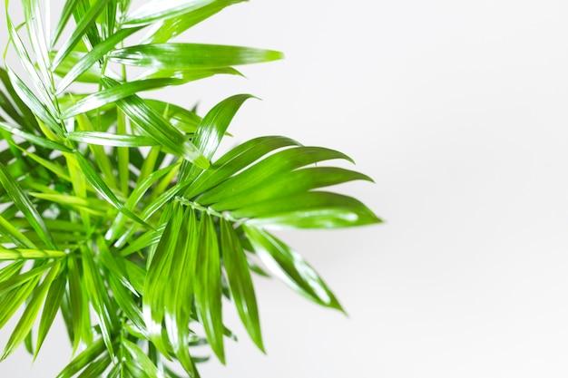 Üppige grüne blätter auf weiß Kostenlose Fotos