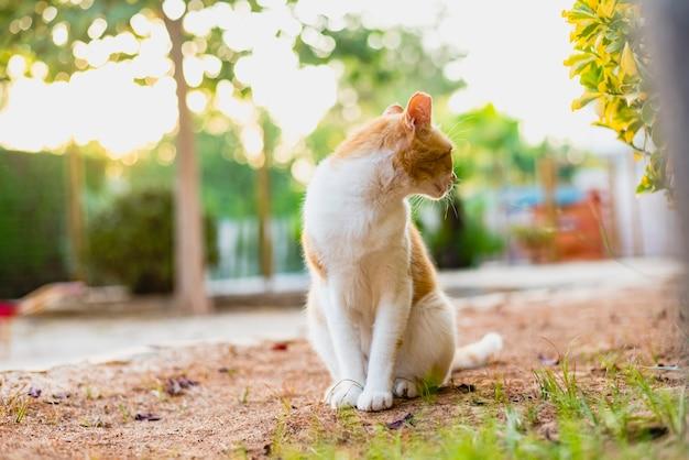 Unabhängige und faule straßenkatzen. Premium Fotos