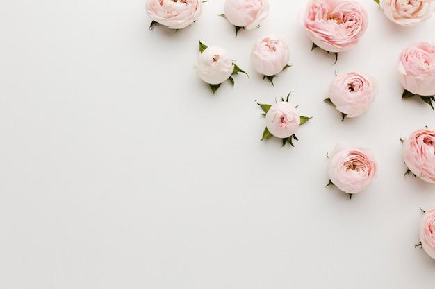Unbedeutende rosa und weiße rosen und kopienraumhintergrund Premium Fotos