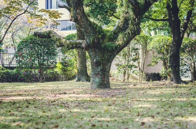 Undeutlich vom baum im garten, japan Premium Fotos
