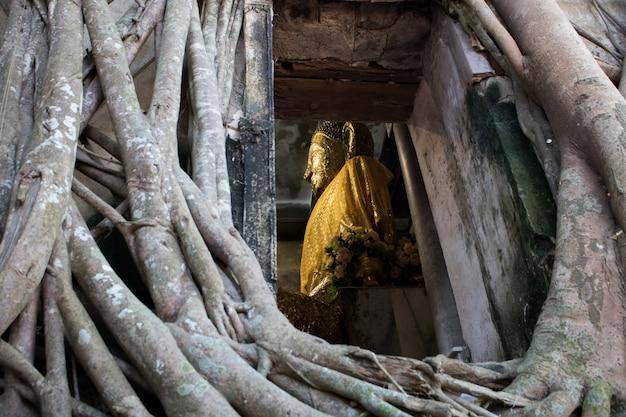 Ungesehenes thailand wat bang kung, buddhistischer tempel mit dem großen baum bei amphawa Premium Fotos