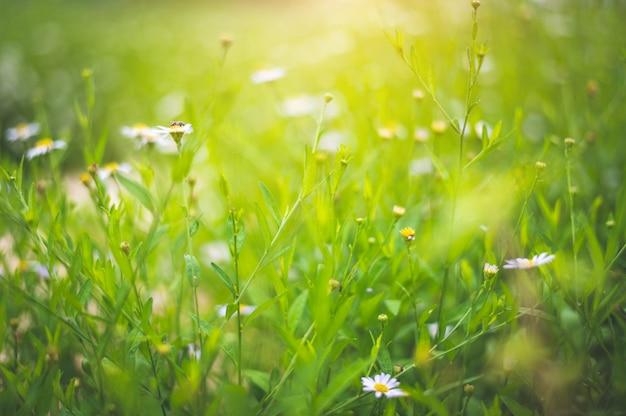 Unscharfe feldpflanzen mit weißen blumen Premium Fotos