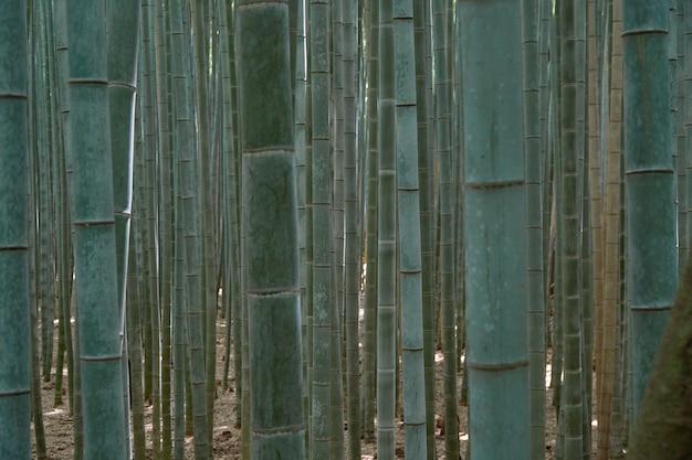 Unscharfer bambuswald Premium Fotos