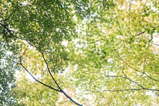 Unter den grünen blättern in kyoto, japan. Premium Fotos