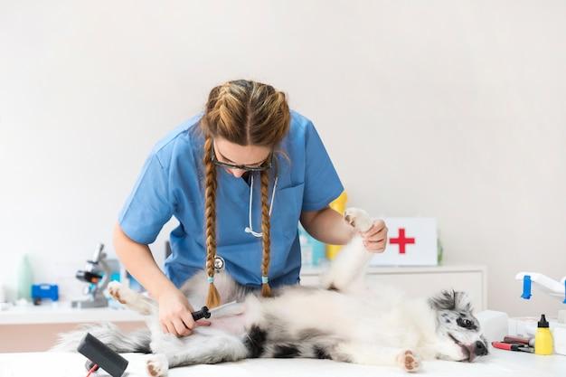 Untersuchungshund des jungen weiblichen tierarztes in der klinik Kostenlose Fotos