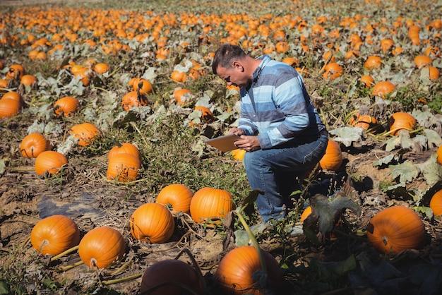Untersuchungskürbis des landwirts auf dem gebiet Kostenlose Fotos