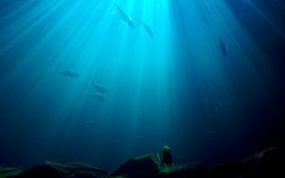 unterwasser, tiere | kostenlose foto