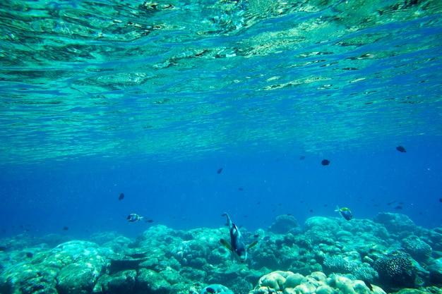 Unterwasserblauer ozeanhintergrund im tropischen strandmeer Premium Fotos