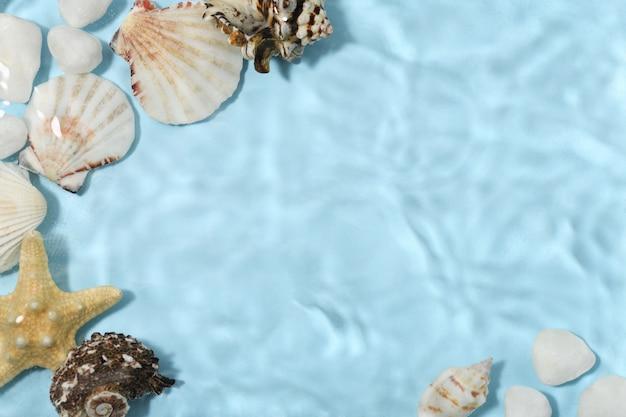 Unterwasseroberfläche mit muscheln Premium Fotos