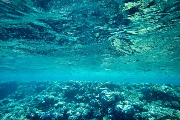 Unterwasserszene mit kopierraum Premium Fotos