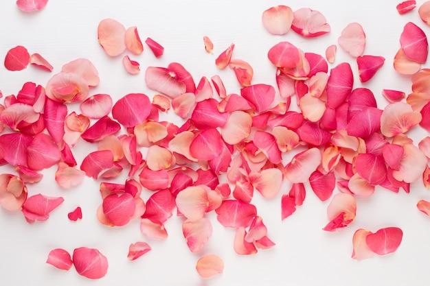 Valentinstag. rosenblütenblätter auf weißem hintergrund. valentinstag hintergrund. flache lage, draufsicht, kopierraum. Premium Fotos