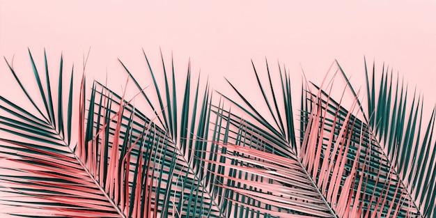 Variationen tropische palmblätter flach legen draufsicht Premium Fotos
