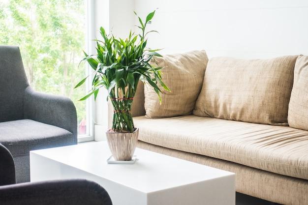 Vase pflanze Kostenlose Fotos