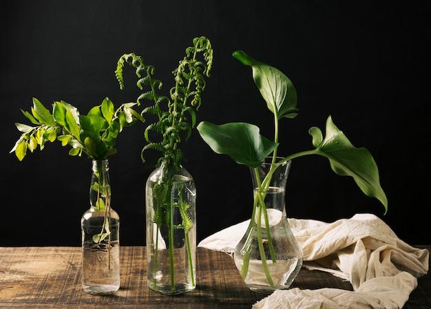 vasen mit gr nen pflanzen kostenlose foto