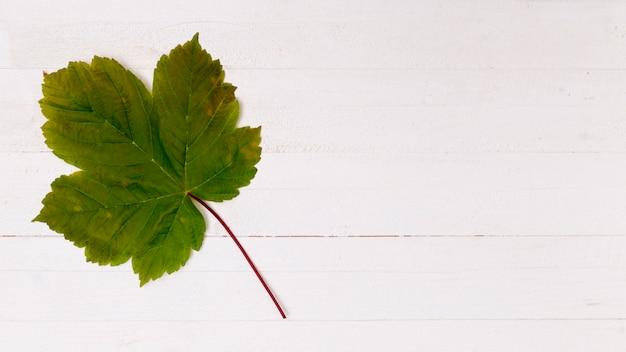 Vereinfachtes ahornblatt mit kopienraum Kostenlose Fotos