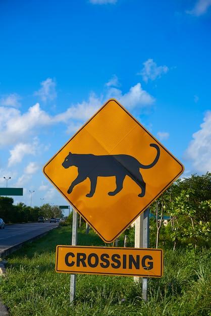 Verkehrsschild panther jaguar, der mexiko kreuzt Premium Fotos