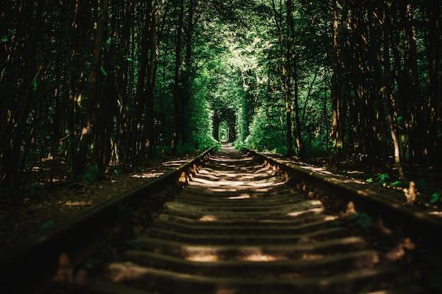 Verlassene eisenbahn in einem grünen wald Premium Fotos