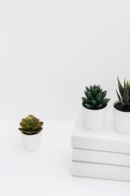 Verschiedene eingemachte kaktuspflanze mit staplung der bücher gegen weißen hintergrund Kostenlose Fotos