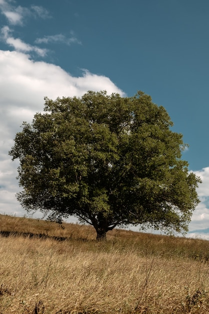 Vertikal eines grünen baumes in der mitte eines feldes während des herbstes Kostenlose Fotos