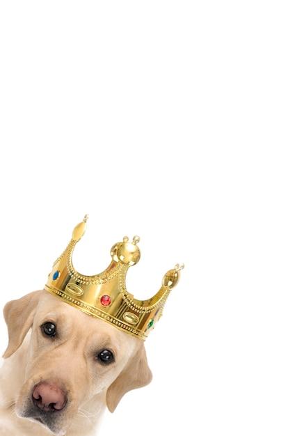 Vertikal, gesicht eines hundes in einer krone. Premium Fotos