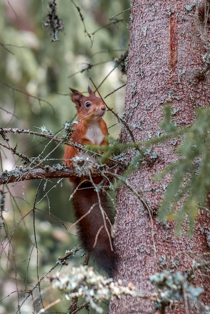 Vertikal von einem niedlichen eichhörnchen, das mitten im wald heraushängt Kostenlose Fotos