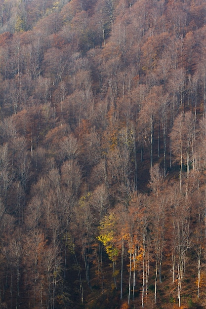 Vertikale aufnahme der hohen trockenen bäume auf dem berg medvednica in zagreb, kroatien Kostenlose Fotos
