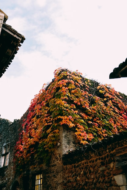 Vertikale aufnahme der schönen alten gebäude mit bunten herbstblättern bedeckt Kostenlose Fotos
