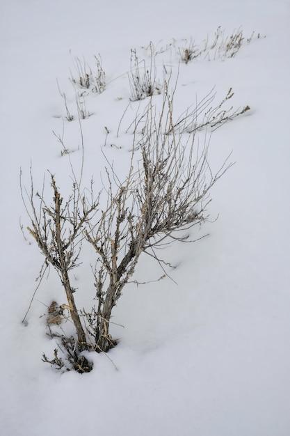 Vertikale aufnahme einer blattlosen pflanze, die mit schnee bedeckt ist Kostenlose Fotos