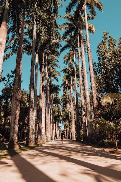 Vertikale aufnahme einer frau, die auf einer palmenbedeckten straße im botanischen garten in rio de janeiro geht Kostenlose Fotos