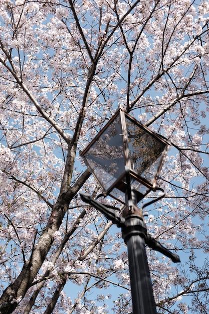 Vertikale aufnahme einer lampe unter dem schönen blühenden kirschbaum mit dem hintergrund des blauen himmels Kostenlose Fotos