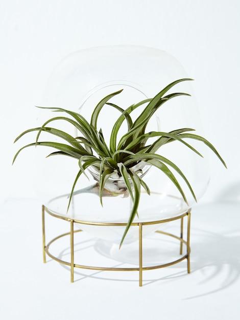Vertikale aufnahme einer schönen zimmerpflanze in einem blumentopf auf einem weiß Kostenlose Fotos