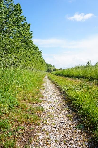 Vertikale aufnahme einer unbefestigten straße mit bäumen und grasfläche an den seiten Kostenlose Fotos