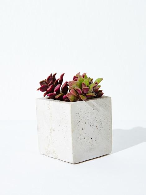 Vertikale aufnahme einer zimmerpflanze in einem konkreten blumentopf auf einem weißen hintergrund Kostenlose Fotos