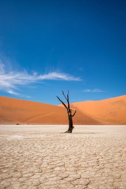 Vertikale aufnahme eines blattlosen baumes in einer wüste mit sanddünen in der Kostenlose Fotos