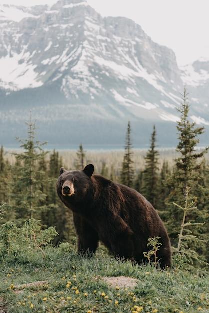 Vertikale aufnahme eines niedlichen bären, der in einem wald hängt, der durch berge umgeben ist Kostenlose Fotos