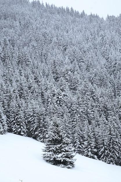 Vertikale aufnahme eines schneebedeckten alpenwaldes in den französischen alpen im winter Kostenlose Fotos