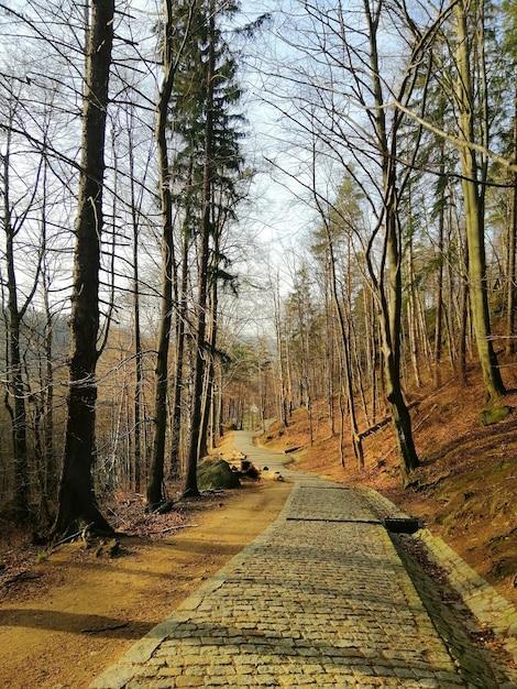 Vertikale aufnahme eines steinweges in den hügeln bedeckt in den bäumen in jelenia góra, polen. Kostenlose Fotos