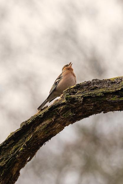Vertikale aufnahme eines vogels, der auf einem zweig sitzt Kostenlose Fotos