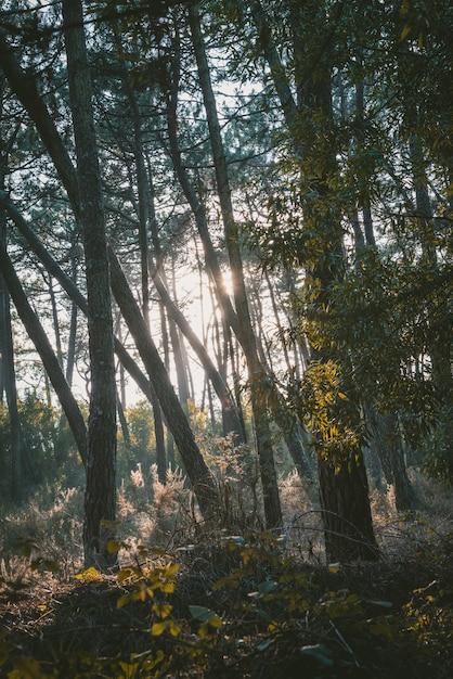 Vertikale aufnahme eines waldes mit grünen bäumen Kostenlose Fotos