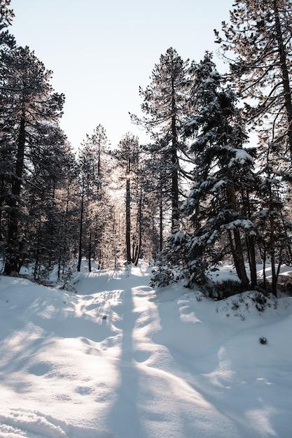Vertikale aufnahme eines waldes mit hohen bäumen im winter Kostenlose Fotos
