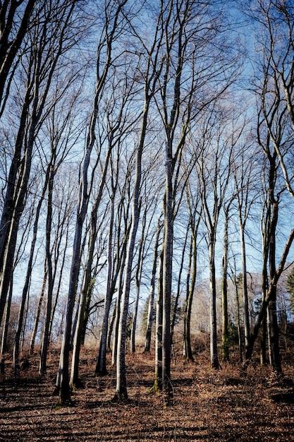 Vertikale aufnahme eines waldes mit vielen blattlosen bäumen Kostenlose Fotos