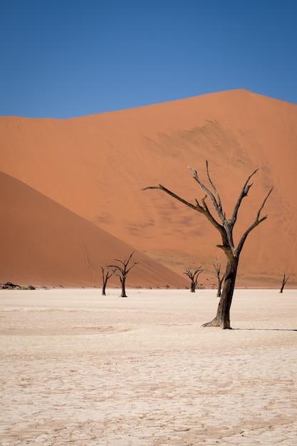 Vertikale aufnahme von blattlosen bäumen in einer wüste mit hohen sanddünen Kostenlose Fotos